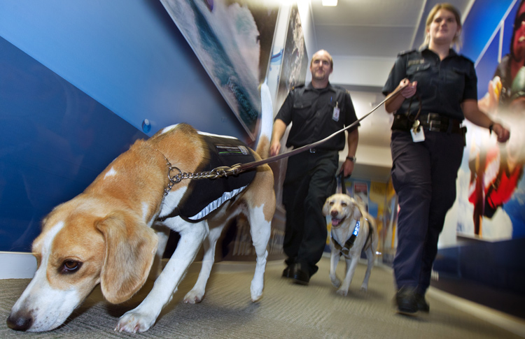 Airport Drug Dogs