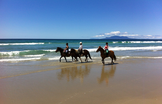Perfect day trip to discover New Zealand from the back of a horse.
