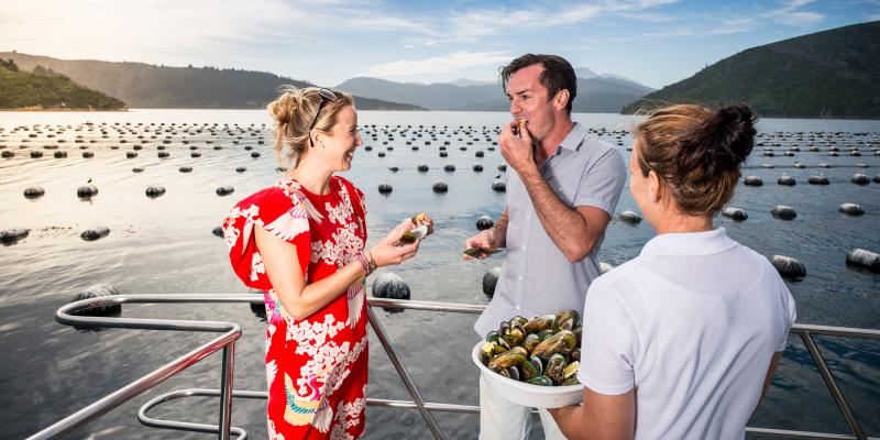 Marlborough Sounds Mussel and Wine Tour
