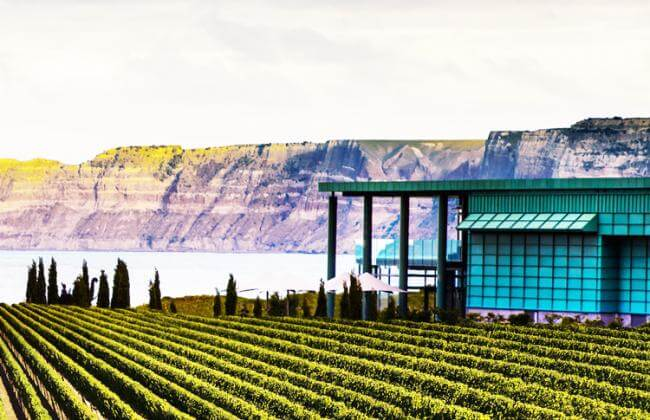 Hawkes Bay Vineyard