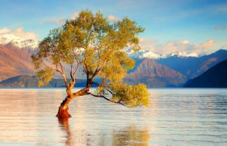 Lonely Tree Lake Wanaka