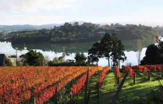 Matakana vineyards