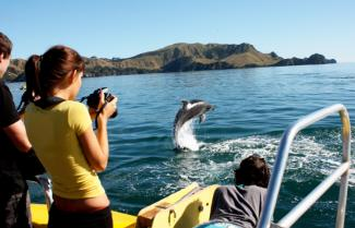 Island Cruise and Dolphin Viewing