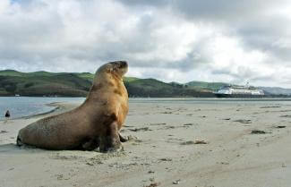 Sea Lion Wildlife Cruise