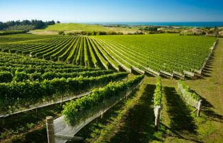 Hawke's Bay Wine Region