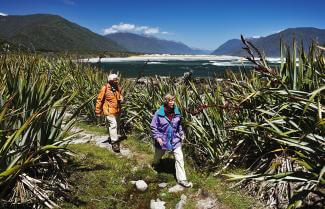 Discover Martins Bay on the Hollyford Track