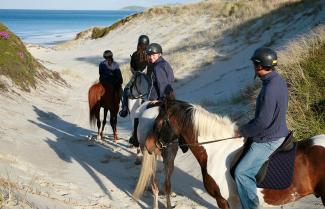 Pakiri Beach Horse Riding Tour