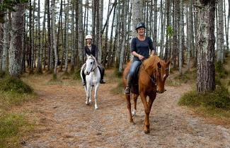 Horse Riding, Pakiri Beach