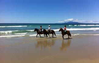 Guided Horse Trekking at Pakiri Beach, North Island