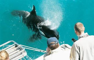 Auckland Whale and Dolphin Safaris
