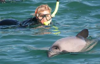 Girl swimming with dolphins in Akaroa Harbour.