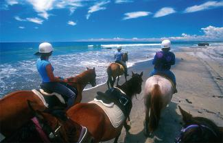 Horse Riding at Pakiri Beach, New Zealand