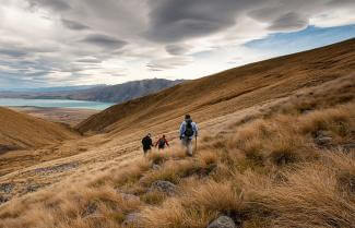 tussock Grass NZ