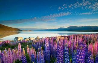 Beutiful High Country Lake Tekapo.