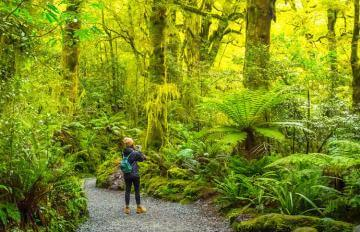 Fiordland Hiking
