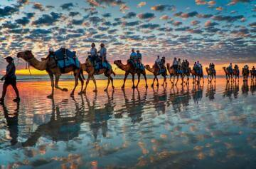 Tourism or Tucker – The Plight of the Australian Camel.