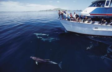 Dolphin and whale encounters in New Zealand